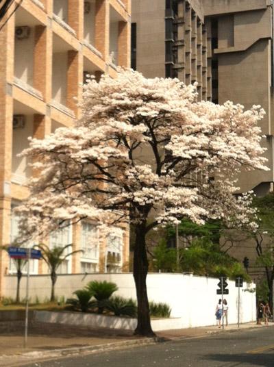 white-tree-01