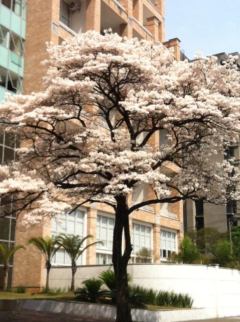 white-tree_p2