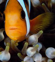 peixechamadotovi