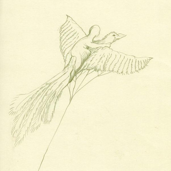 aguia-amarela_p2