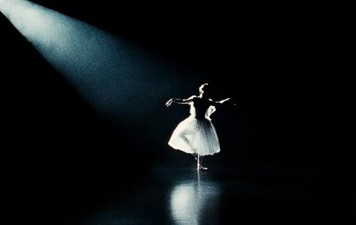 Cisne Negro 01.jpg