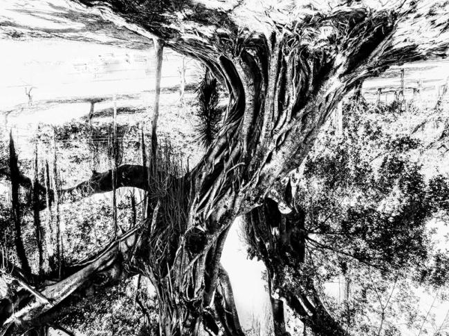 Cypress_P2