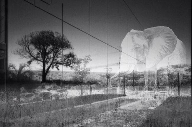 The elephant_P2